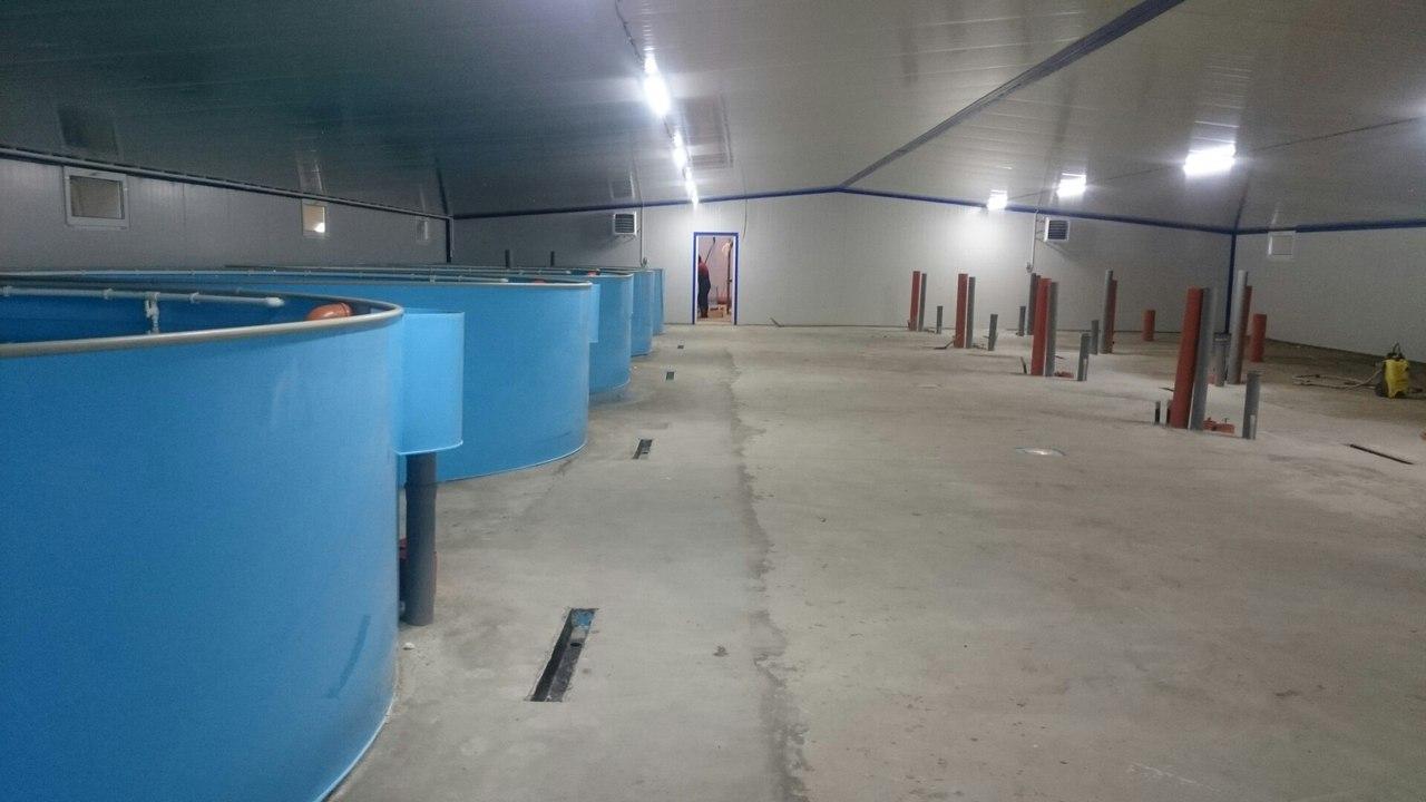 Готовая линия УЗВ по выращиванию клариевого сома.