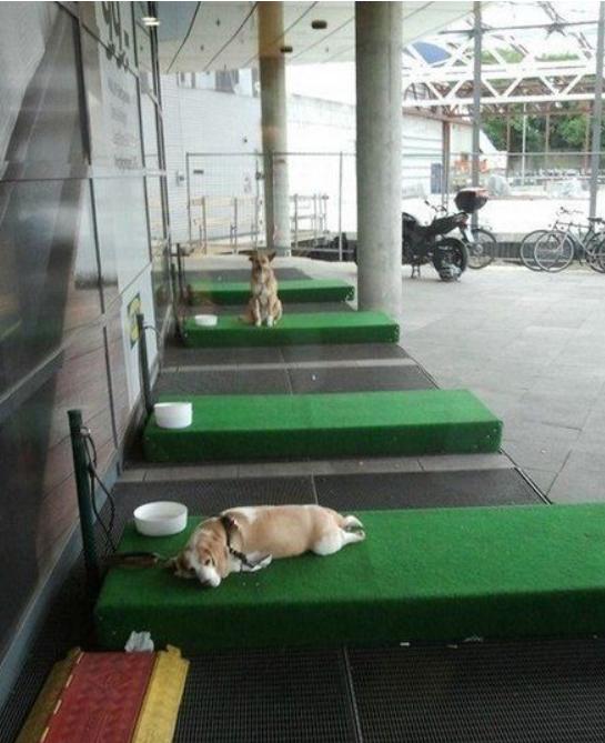 Парковка для собак в Турции