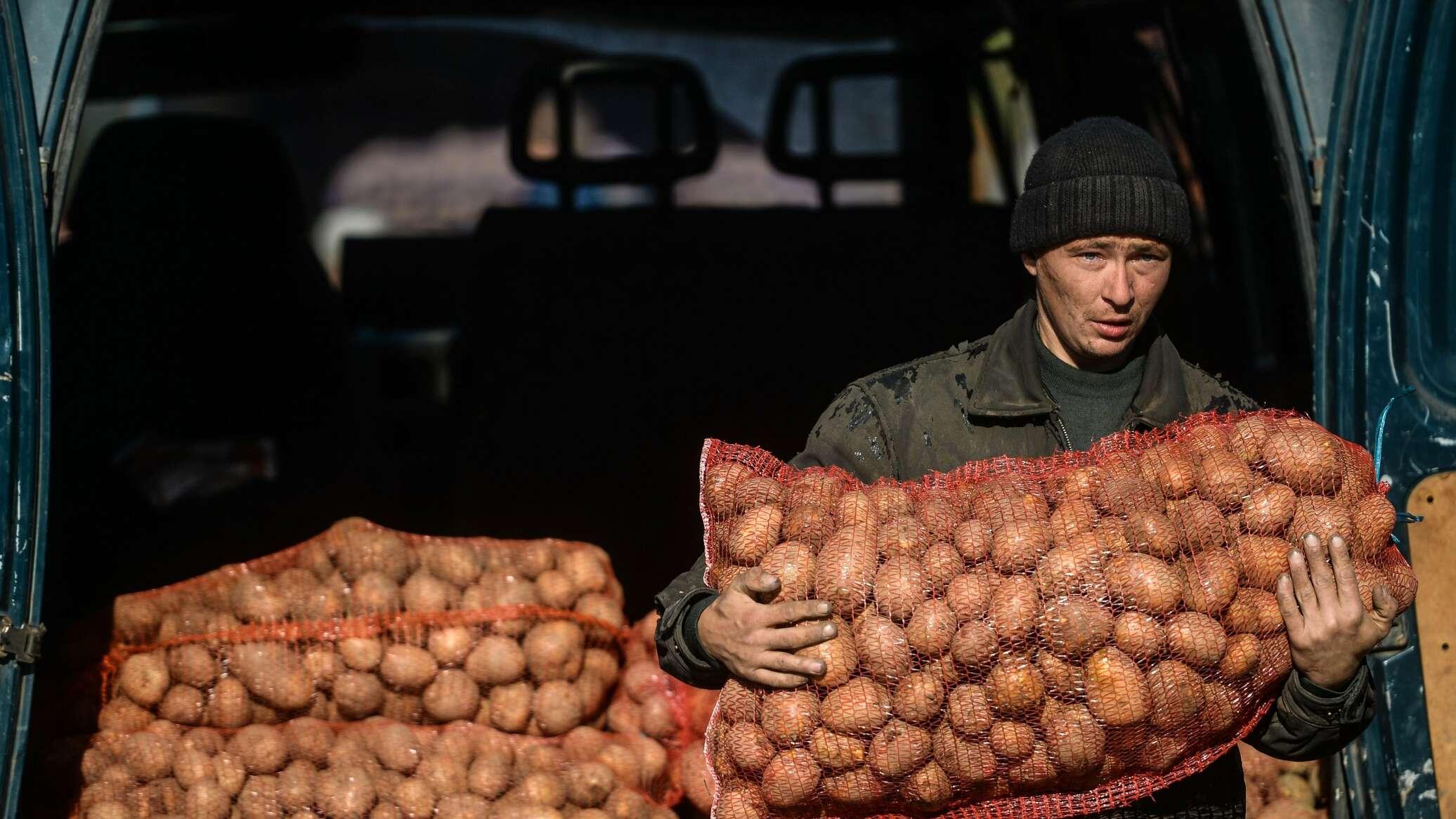 ДНР и ЛНР снизили ставки ввозных пошлин на овощи в 3-5 раз
