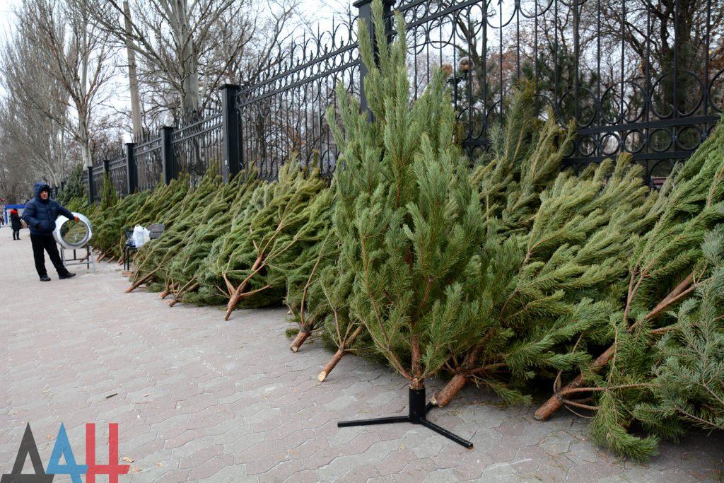 В ДНР новогодние елки из лесхозов будут продаваться по 300-500 рублей за дерево