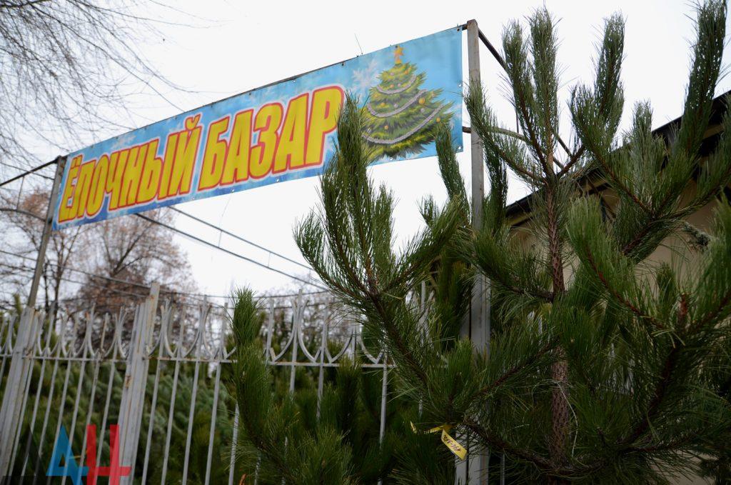 От 400 до 12 тыс. рублей за дерево. В Донецке начали работать елочные базары