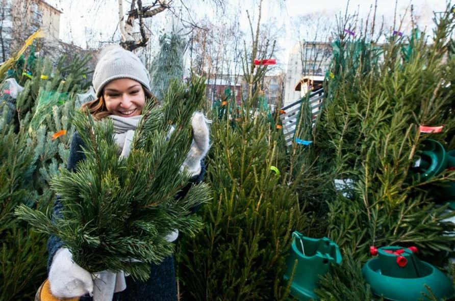 В Донецке начнут работу 100 елочных базаров. Адреса